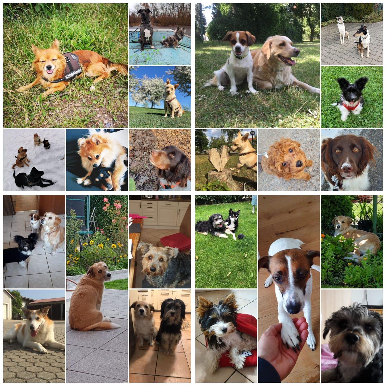 Stadtrat beschließt die Einrichtung einer umzäunten Hundefreilaufzone